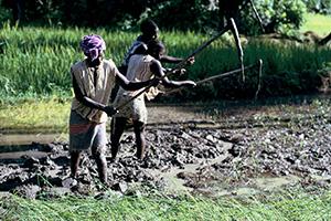 Achat de matériel agricole